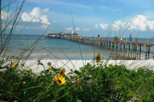 Pier and beach plants